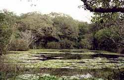 The Whistling Duck Pools at Arabuko-Sokoke Forest, Kenya.