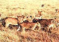 Kenya Deluxe, the elegant way to go on safari in kenya with bestofkenya.com